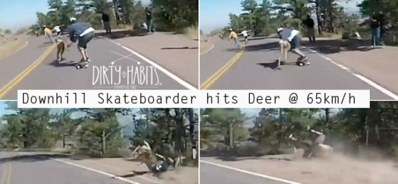 deer hits skateboarder
